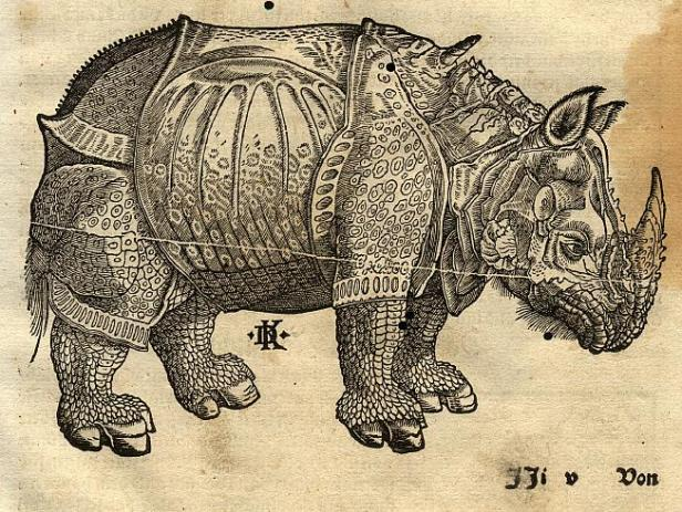 A_rhinoceros_(1550)